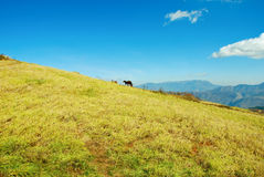 Blue sky ,hill and grass Stock Photos