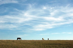 Blue sky and horses. Three horses on the prairie and blue sky Stock Photos