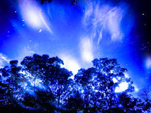 Blue sky jungle in the night time. Look like moon shine Royalty Free Stock Photography