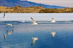 Blue sky, lake with mountain and flaying seagulls. Lake Baikal, Russia Royalty Free Stock Image