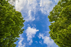 Blue sky and lush green trees Royalty Free Stock Photography