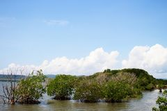 Blue sky with mangrove. Blue Sky on top of Mangrove Trees in Bay Stock Image