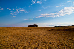 Blue sky and meadow with dry grass. Stock Photography