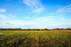 Blue sky and Meadows Royalty Free Stock Images