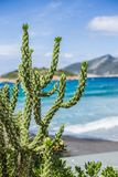 Cactus at the coast of Mallorca. The blue sky the blue ocean and some mountains in the backyard. The Cactus has the best view Stock Photos