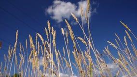 Blue Sky och Grass Field arkivfilmer