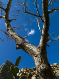 Blue sky and old tree. Sunny summer day, blue sky white clouds, big tree Royalty Free Stock Photography