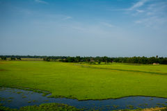 Blue sky with open grass field Royalty Free Stock Photo
