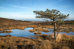 Blue sky over Autumn heath landscape Stock Photo