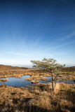Blue sky over Autumn heath landscape Stock Image
