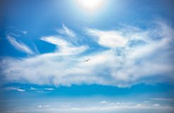 In the blue sky over the black sea flying sea bird Seagull stock photo