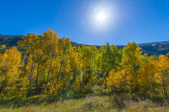 Blue Sky over Colorful Fall Trees Royalty Free Stock Photos