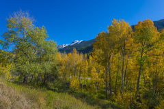 Blue Sky over Colorful Fall Trees Royalty Free Stock Photography