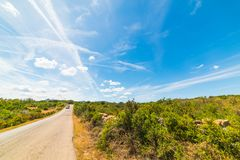 Blue sky over a country road in Sardinia Stock Images