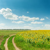 Blue sky over field with sunflowers Stock Photography