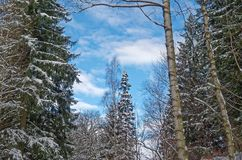 Blue sky over forest in Harz mountains in a winter. Blue sky over winter forest, Harz mountains national park, Germany royalty free stock photos