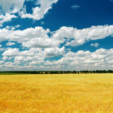 Blue sky over golden field Stock Photo