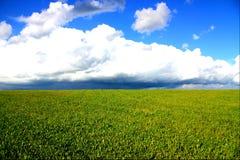 Blue sky over green grass Stock Image