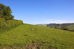 Blue sky over green hillsides Stock Images