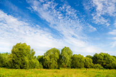 Blue sky over the green meadow. Stock Images