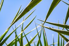 Blue sky over me with close up from palm leafs royalty free stock images