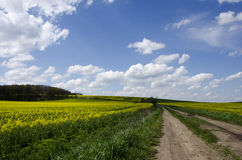 Blue sky over the rape field Royalty Free Stock Photo