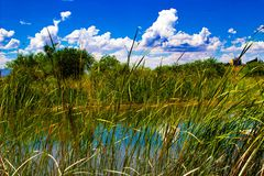 Blue sky over a reed filled pond stock images