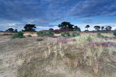 Blue sky over sand dunes with flowers Stock Photos