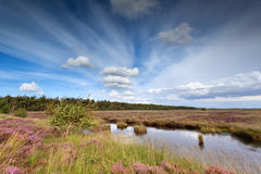 Blue sky over swamp with heather Royalty Free Stock Image