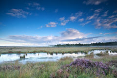 Blue sky over swamp with heather Royalty Free Stock Images