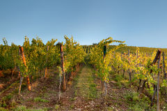 Blue sky over vineyard Stock Photos