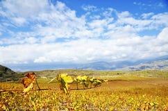 Blue sky over a vineyard Stock Photography