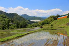 Paddy field and blue sky stock image