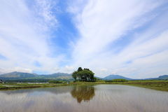 Blue sky and paddy fields Royalty Free Stock Image
