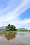 Blue sky and paddy fields Stock Photography