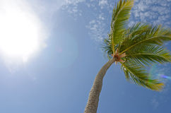 Blue Sky Palm. Image of a palm tree in the sky Royalty Free Stock Photos
