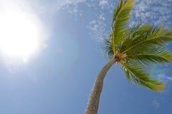 Blue Sky Palm Royalty Free Stock Photos