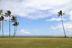 Blue sky with palm tree. Clear blue sky with palm tree and green grass Royalty Free Stock Photography