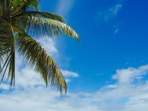 Blue sky with a palm tree branch. BPalm tree branch with a blue sky and some clouds Royalty Free Stock Image