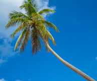 Blue Sky and Palm Tree Royalty Free Stock Photo