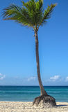 Blue Sky and Palm Tree Royalty Free Stock Images