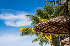 Blue sky with palm tree and umbrella Stock Image