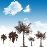 Blue sky and palm trees Stock Image