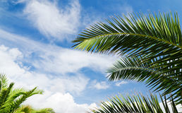 Blue sky with palm trees Stock Photos