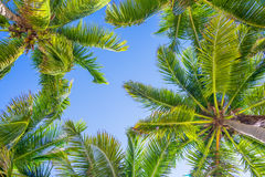 Blue sky and palm trees from below stock photography