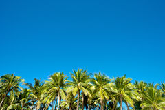 Blue sky with palm trees in Boracay Royalty Free Stock Image