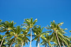 Blue sky with palm trees in Boracay Royalty Free Stock Images