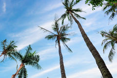 Blue sky and palm trees Royalty Free Stock Images