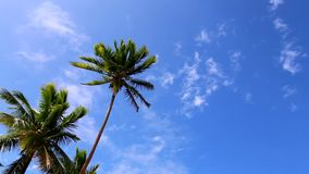 Blue sky and palm trees stock video