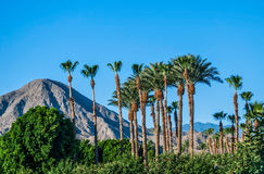 Blue Sky and Palm Trees. A perfect blue sky, palm trees and the San Jacinto Mountains of Palm Springs California Royalty Free Stock Photo